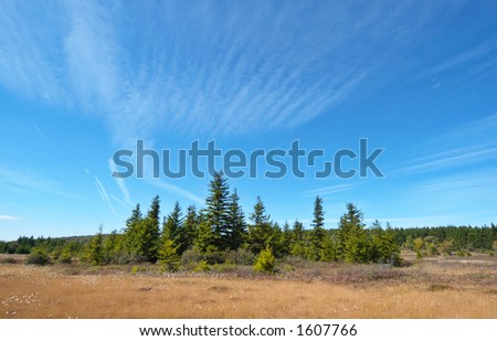 Blue sky landscape. Dolly Sods, Monongahela National Forest, West Virginia, USA - stock photo