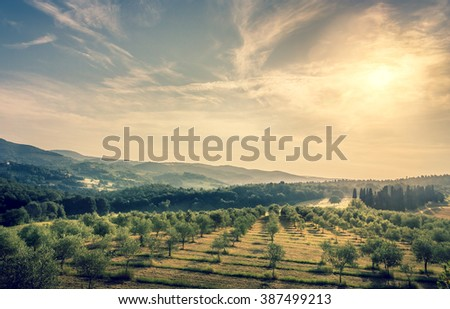 Blue sky over olive field in Tuscany - stock photo