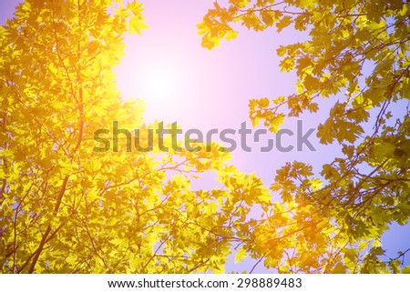 Blue sky through the trees - stock photo