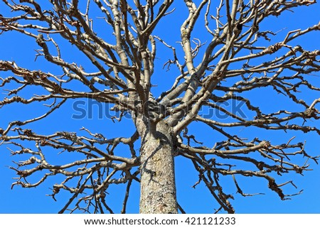 Blue sky. tree without leaves. branches. creative photo.  - stock photo