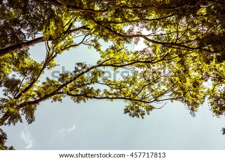 blue sky with cloud closeup,green birch leaves shining in the sun on blue sky background,Leaves isolated on the blue sky background.spring landscape of trees against the sky - stock photo