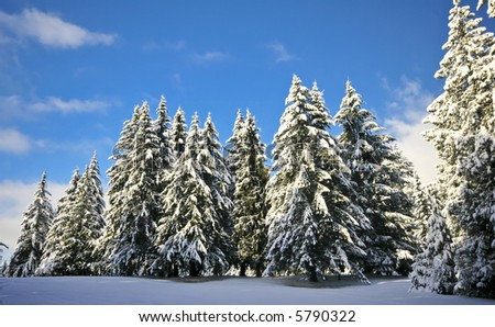 Blue sky with snow on trees - stock photo