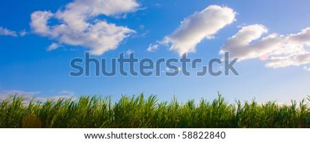 Blue sky with some clouds over a Sugar Cane field -Maui, Hawaii - stock photo