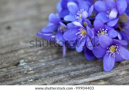 blue spring flowers on wooden table - stock photo