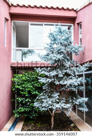 Blue spruce in interior garden - stock photo