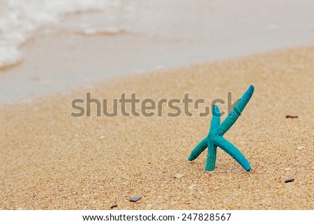 Blue starfish with ocean beach and seascape - stock photo