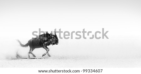 Blue wildebeest in the desert (Artistic processing) - stock photo