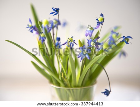 Bluebell flowers bouquet in small glass close-up - stock photo