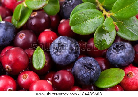 Blueberry and cowberry with green leaves - stock photo