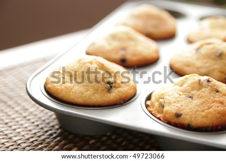 Blueberry and oat muffin in a pan - stock photo