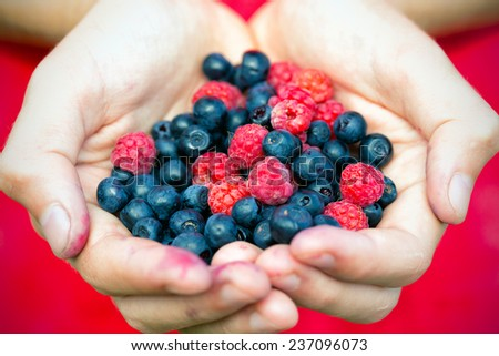 blueberry and  raspberries at the hands  - stock photo
