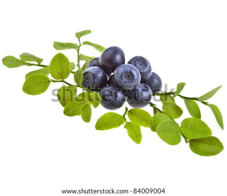 blueberry heap with green leaves close up macro isolated on white background  - stock photo