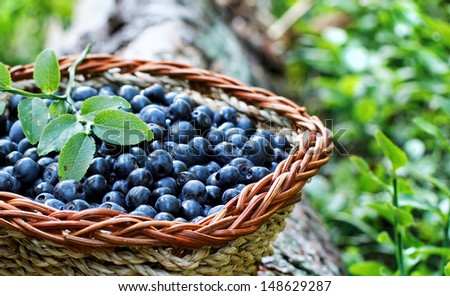 blueberry in a basket - stock photo