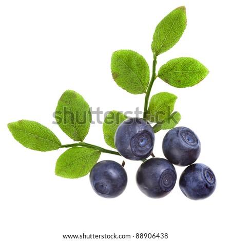 blueberry isolated - stock photo