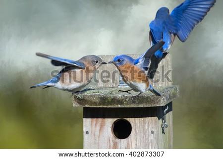 Bluebird Disco - stock photo