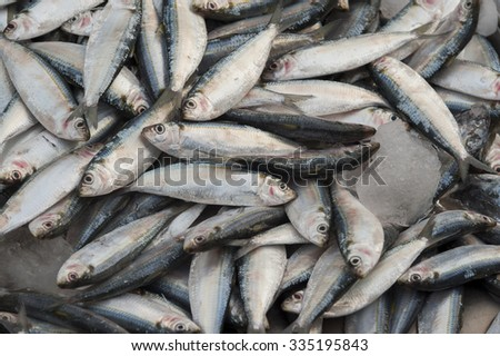 bluefin tuna fish as a background - stock photo
