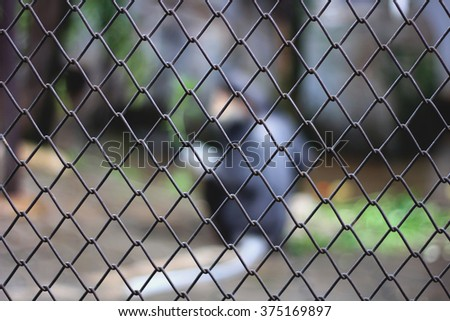 blur animal in the cage