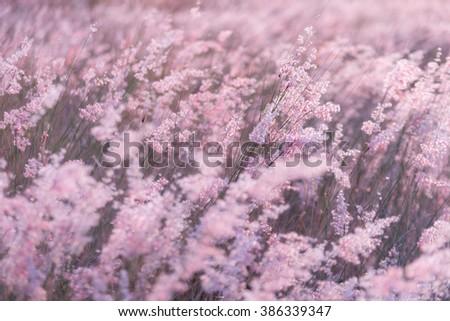 Blur  flowers grass in meadow,  - stock photo