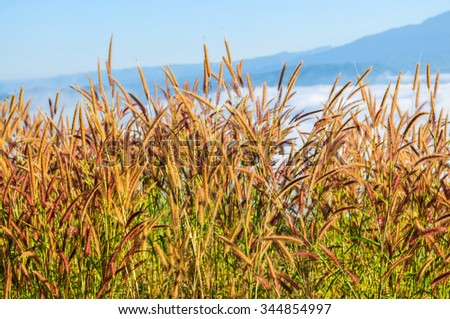 Blur flowers of grass in the morning. - stock photo