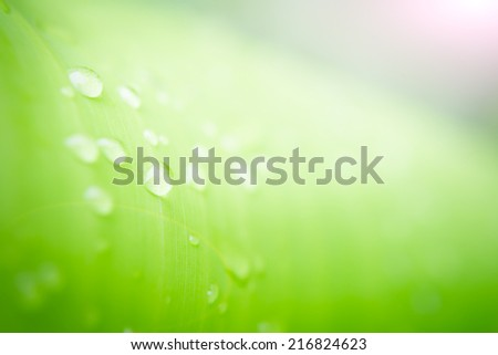 blur green of banana leaf with water drop for nature background - stock photo