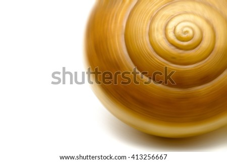 Blur image of a spinning brown tiny snail shell on white background. - stock photo