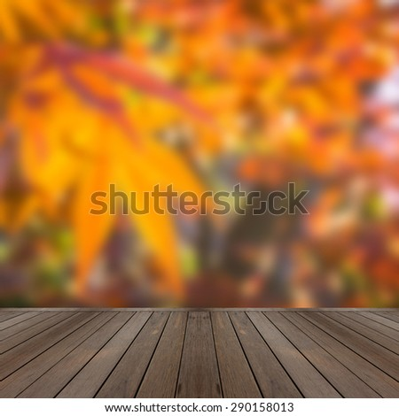 Blur maple tree in autumn season the concept of natural warm at the dawn of spring, not fall. Japan Every forest was dotted with red-orange with dry leaves. - stock photo