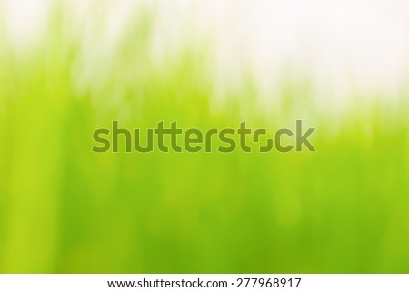 Blur of Grassland abstract nature background  - stock photo