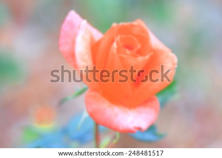 Blur of Rose flower - stock photo