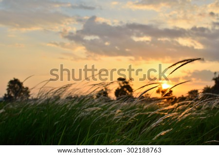 Blur scene of grass flower in the field during sunset - stock photo