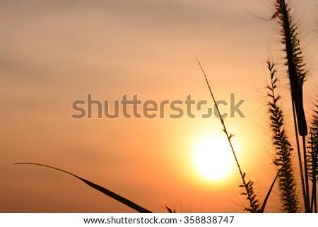 blur sunset light with grass flower. - stock photo