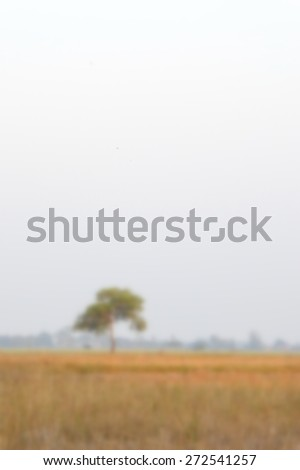 blured  mountain landscape with single tree - stock photo