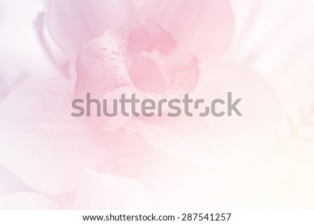 blurred artificial orchid flower in pastel color - stock photo