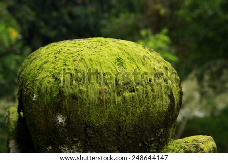Blurred background green moss on the stone and brick walls in Bali. - stock photo