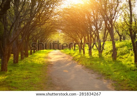 Blurred background image for the screen with text. Concept for text, design, advertising about spring, summer, sunset, sun, nature, park, road, shadow, trips, walking, health, lifestyle, green grass. - stock photo