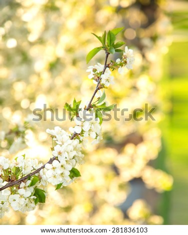 Blurred background image for the screen with the text. The concept for the text about the spring, summer, flowers, health, allergy. Blurred background and bokeh. De focused free space - popular trends - stock photo
