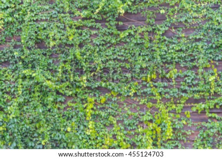 Blurred background of Green leaves wall and old wood wooden background texture / Natural green leaf wall, Texture background - stock photo