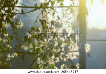 Blurred background of nature. Nature Bokeh. Concept - blurred kind of nature in the rays of sun light. Blurred background image is used as a substrate for a text. Awakening of nature spring. - stock photo