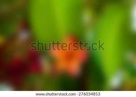Blurred Beautiful Plumeria Flower, Naturally beautiful flowers in the garden - stock photo