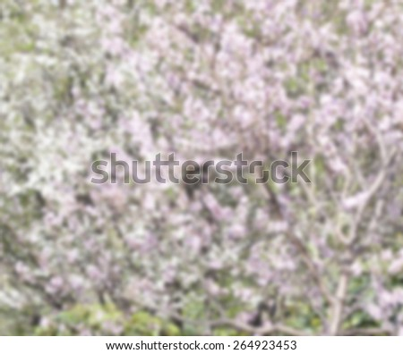 Blurred blossoms background  - stock photo