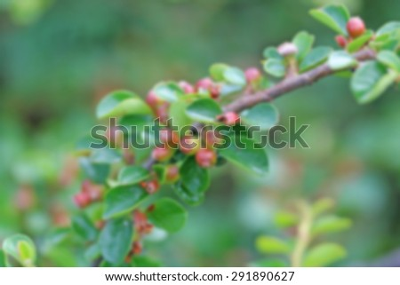 Blurred decorative plant branch closed up - stock photo