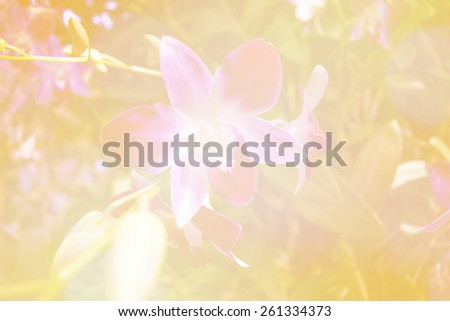 Blurred dreamy orchid flower for background. - stock photo
