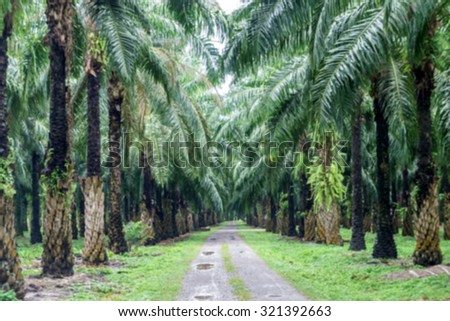 Blurred - main road in the oil palm plantation - stock photo