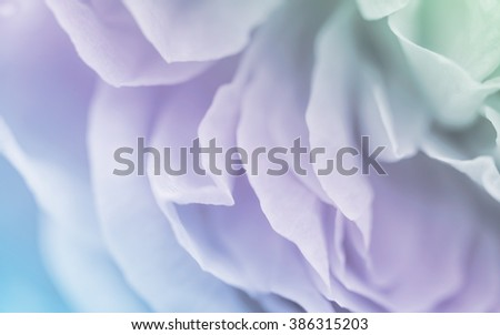 Blurred of roses in soft pastel color and blur style for background - stock photo