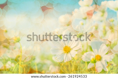 Blurred of Sweet color cosmos flowers in bokeh texture soft blur for background with pastel vintage retro style. - stock photo