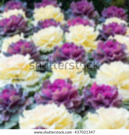 blurred of white and purple flowers in plot, defocus of view, defocus image, natural blurred flowers background. - stock photo