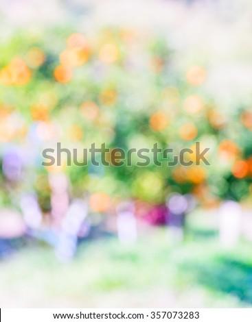Blurred orange trees in a orange orchard. - stock photo
