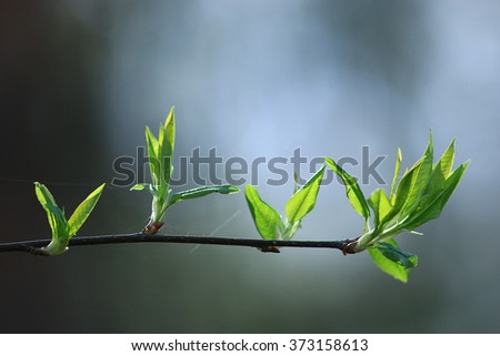 blurred spring background, young branches with leaves and buds - stock photo