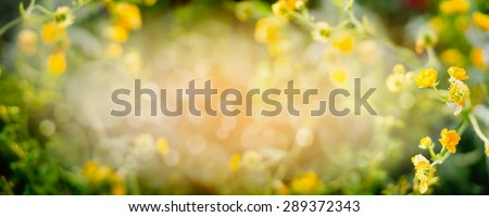 Blurred summer nature background with yellow garden or park flowers, banner for website - stock photo