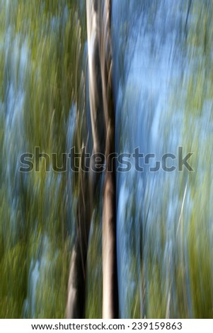 Blurred Trees  - stock photo