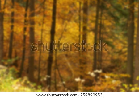 Blurred view of beauty autumn forest with leaves - stock photo